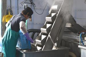 工場へ運ばれた素材を丁寧に洗います